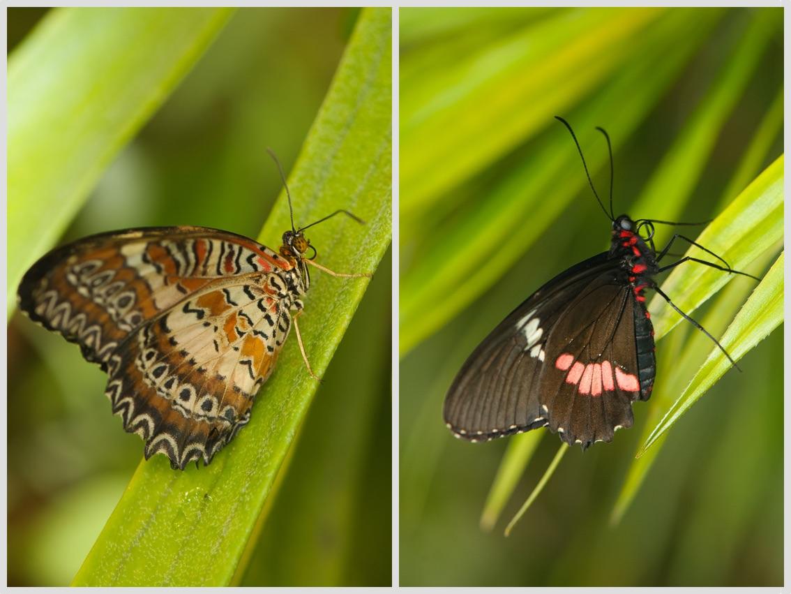 Tropický motýl ve skleníku Fatamorgana