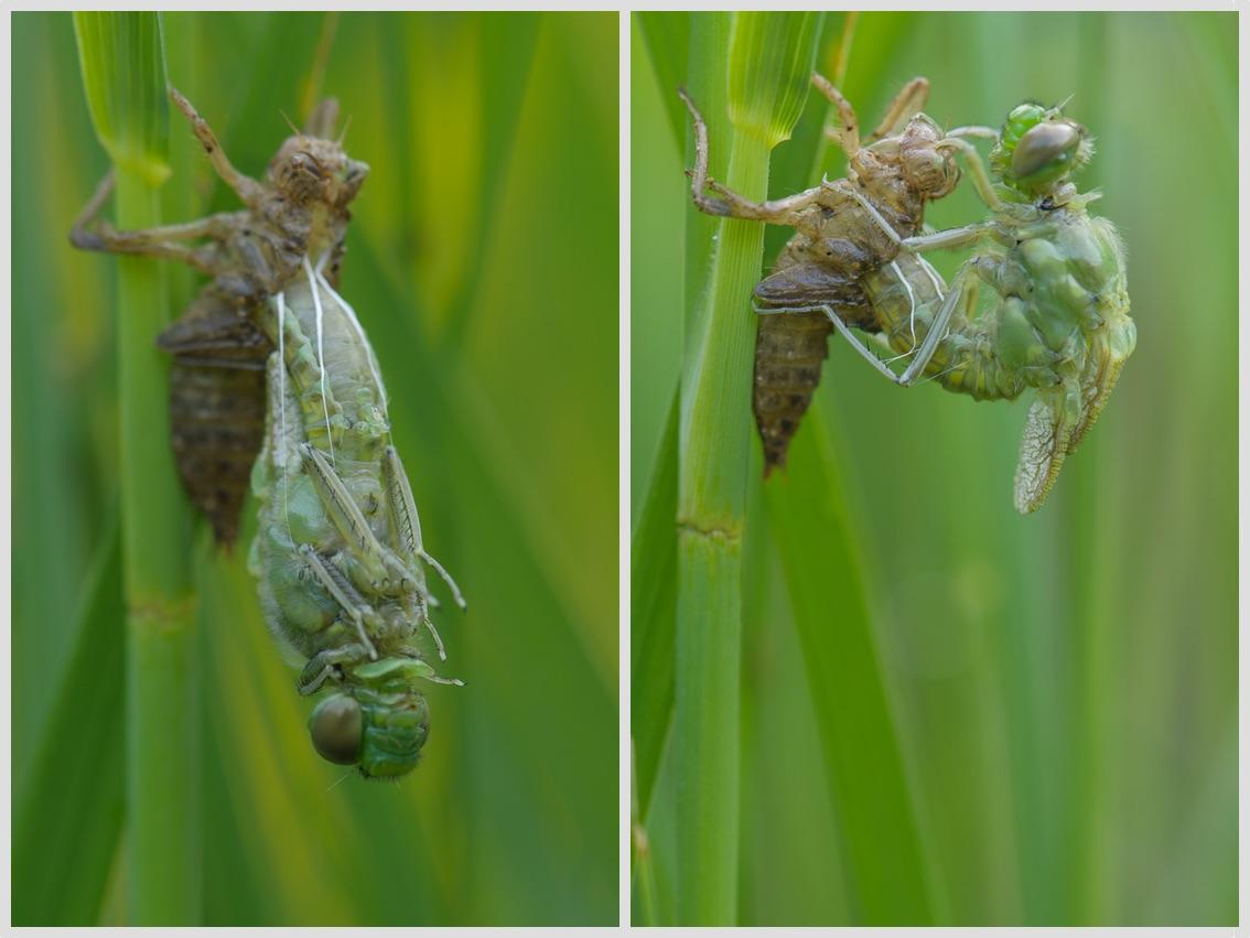Zrození vážky