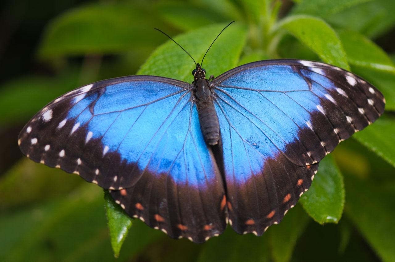 Tropický motýl